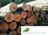 New Zealand Radiata Pine Logs - K Grade