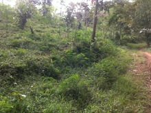 cheap land for lease