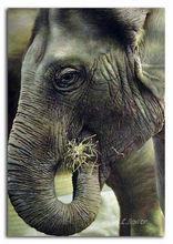 elephant eating grass 2013 new design animal oil painting