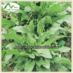 Chinese rhubarb extract and Chrysophanol/Rhein Rheum P.E.--Emodin, Rhein, Chrysophanol