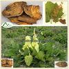 Wholesale Natural Sex Herb Medicine Rheum Officinale
