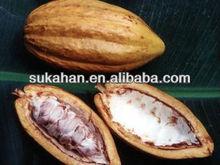 Microbial Fertilizer for Cocoa Plantation