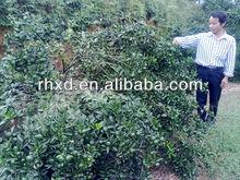 2013 New crop Chinese mandarin orange
