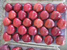 buy fresh apple fruit /huniu apple in bulk wholesale apple fruit
