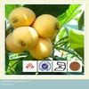 Plant extract loquat leaf extract, ursolic acid 25%