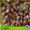 China (mainland) buckwheat price wholesale buckwheat,wheat