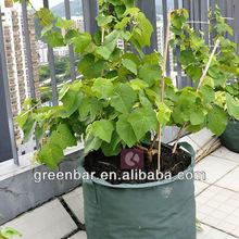 roof garden flower planting landscape design potato grow bags