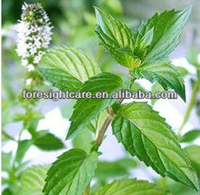 peppermint essential oil 99%from the biggest manufacturer from China