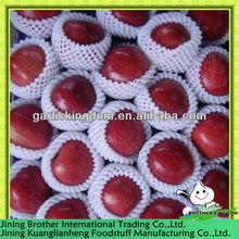hotsales Gansu tianshui red delicious apple