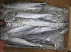 Frozen Pacific Mackerel at very good Prices