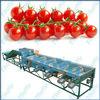 THOYU brand Vegetable and Fruit Size Grade Sorter for Tomato(0086 15903677328)