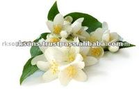 Jasmine Oil Pure Oil Excellent Quality