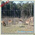 Cerfs et exotiques. jeu clôtures( iso usine yinghangyuan)