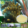 BV/FDA Factory Supply Organic Banana Powder/banana powder feed
