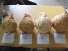 Semi Dehusked Coconut
