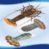 Good Oceancrest Seafood Raw Frozen Lobster