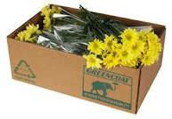 fruit & vegetables exporting cartons