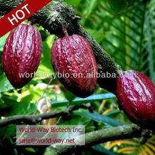 Sale Best price cocoa bean powder