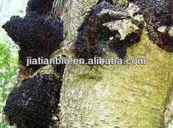 100% Natural Chaga Extract/Polysaccharide10%-50%/Triterpene 2%-10%