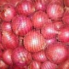 FRESH RED CHEAP Onion