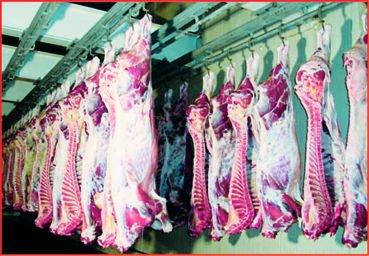 Halal de carne