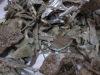 malaysia agarwood chip