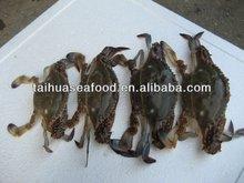 Calidad de mariscos congelados de cangrejo de nieve