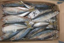 fresh water sea mackerel tuna