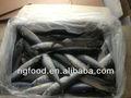 exportation de la chine en mer pêcher le maquereau congelé à bas prix