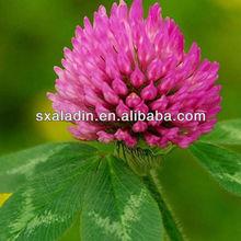 Red Clover Extract 40%Trifolium pratense p.e/ Isoflavones Genistein