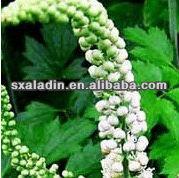 Cimicifuga Romose L.0.5%-10%/PYSON 8% Triterpenoid Glycosides HPLC Black Cohosh extract