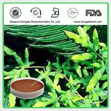 Hot Sale New Product Japanese Climbing Fern Spore Extract