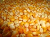 Yellow Maize with high nutrition and aroma