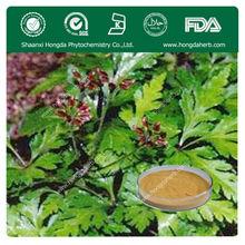 KOSHER, ISO,FDA Manufacturer Chinese Goldthread Rhizome Extract