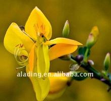 (Manufacturer)Marigold Extract ,Lutein 5-90% HPLC,Zeaxanthin 5%-20%HPLC