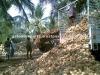 Brown Fresh Matured Coconut