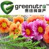 Pelargonium Sidoides Extract