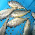 deep mar limpo iqf salte de peixes de água