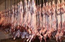 Halal Meat lamb