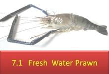 De agua dulce camarones / scampi / udang galah