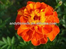 Professional Manufacturer Marigold Flower Extract (5% Zeaxanthin)