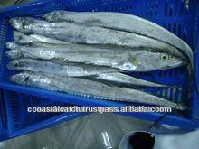 Frozen Ribbon Fish BQF