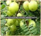 Herbal Amla Extract