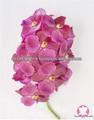 Tailândia eco - friendly natural fresh red orquídeas vanda
