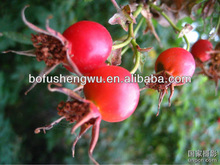 High Natural Vitamin C from Rosehip Extract Powder