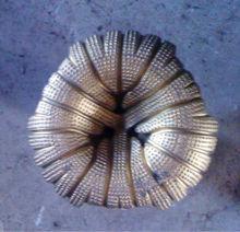 Diamond drill 150 mm bit