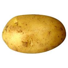 INDIAN POTATO /kentang