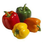 CAPSICUM - SWEET PEPPER
