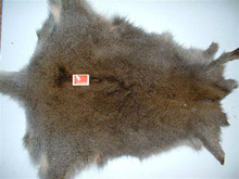 fur skins wallaby