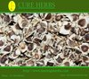 supergenius moringa oleifera seeds for bulk